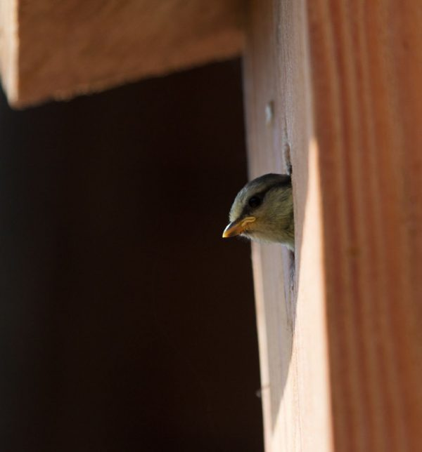 Birds fly from the naturebytes NestBoxes
